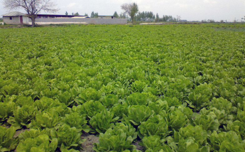 Cultiva futuro, cultivo ecológico con MealFrass